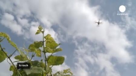 QUI L'EÛT CRU ? – La date des vendanges fixée par satellite | Chimie verte et agroécologie | Scoop.it