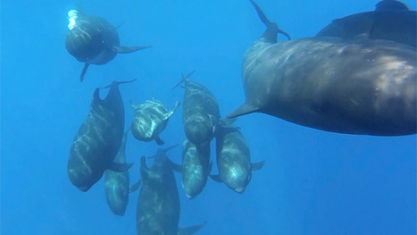 Song of the Whale research boat gets unexpected escort - video | Waste Management & Technology | Scoop.it