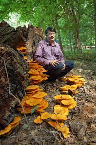 Mushrooms in the Chicago Region | Ethnobotany in the US Mid Atlantic | Scoop.it