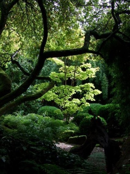 Japanese garden - Click on the image to view the... | Cool Sites I love | Scoop.it