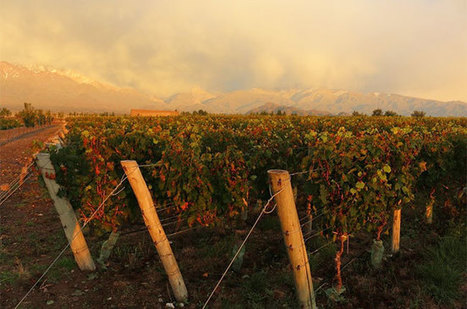 El Nino hampers 2016 #wine harvest in #Argentina | Vitabella Wine Daily Gossip | Scoop.it