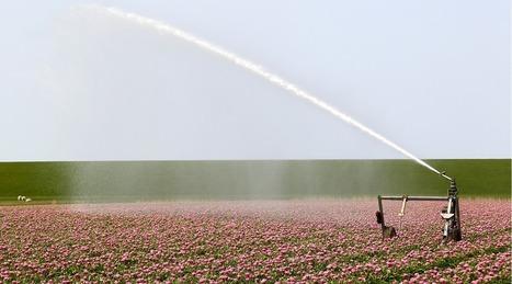 Enjeu d'eaux : la sécurité alimentaire mondiale | Politiques environnementales | Scoop.it