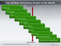 PPT Slide: Top 10 Most Venomous Snakes in the World | snakes | Scoop.it