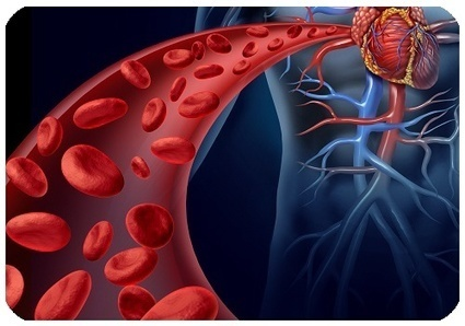 Réduisez votre pression artérielle, combattez les tumeurs et nettoyez votre foie avec la betterave | CRAKKS | Scoop.it