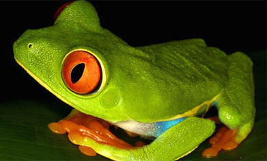Red list 2009: Endangered species for every country in the world | Life on Earth | Scoop.it