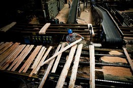 Timber Sales Cultivate Jobs | Timberland Investment | Scoop.it