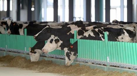 Ferme des mille vaches : Royal réclame une nouvelle enquête publique - Ouest France | Agriculture en Pays de la Loire | Scoop.it