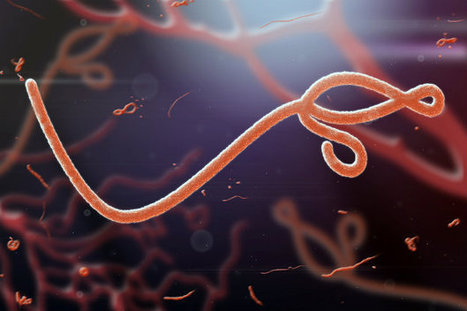 Genes may influence who survives Ebola | Biotech and Beyond | Scoop.it