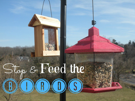 Thoughtful(ology): Follow Up: The Bird Feeders | Thoughtfulology | Scoop.it