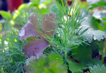 How to Grow Herbs   Planet Natural   Aromatherapy   Scoop.it