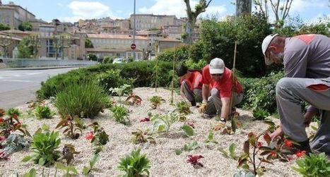 Des milliers de plantes pour refleurir la ville | Professionnels du tourisme du Grand Auch | Scoop.it