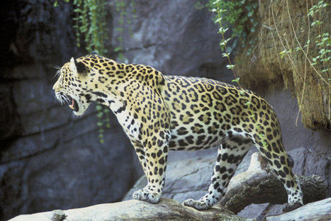 Jaguar selfies, national park impacts and more: Outdoor Insider | The Patriot-News (Harrisburg PA) | CALS in the News | Scoop.it