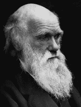 "Free Course: ""Darwin and Design"" Examines Philosophical Questions of Intelligence and Human Behavior 