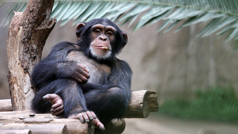 Experts Gather at Yale to Discuss Whether Animals Are People | zoologie ....l'homme et l'animal الإنسان و الحيوان | Scoop.it