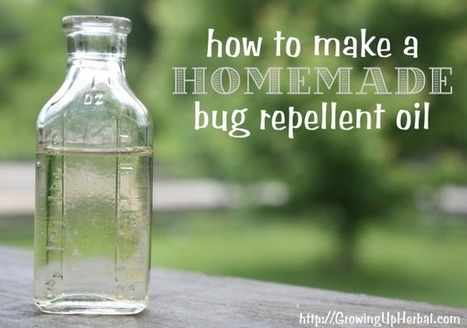 Favorite Things: How to Make Homemade Bug Repellent Oil   Primally Inspired   Aromatherapy plus   Scoop.it