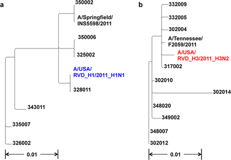 Emergence of Hemagglutinin Mutations During the Course of Influenza Infection | Influenza | Scoop.it