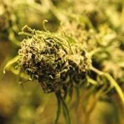 German Politician Smokes Marijuana on Live TV | Quite Interesting News | Scoop.it