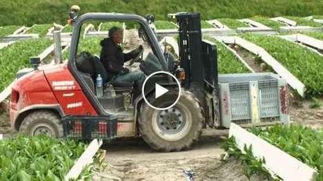 Sirkeci Forklift Kiralama | Kiralık Forklift Hizmetleri 0532 715 59 92 | Scoop.it