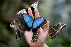 Butterfly decline a worrying portent | Lauri's Environment Scope | Scoop.it
