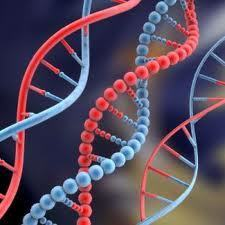 New Discovery: Breast Cancer Enzyme Causes Mutations | Cancer :( | Scoop.it