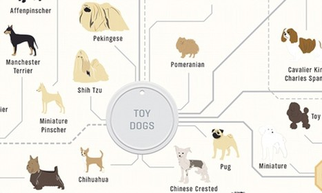 The family tree of DOGS: Infographic reveals how every breed is related - Daily Mail | pets magazine | Scoop.it