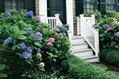 5 Tips for Growing Gorgeous Hydrangeas | Garden Ideas by Team Pendley | Scoop.it