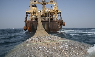 Supertrawlers to be banned permanently from Australian waters | Bees | Scoop.it