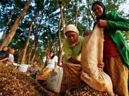 Local communities, not global financiers, are the best forest managers | Ethics | Scoop.it