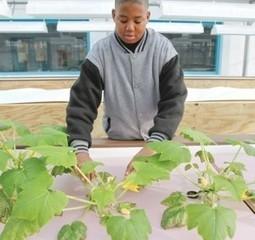 Youngstown High School Opens Aquaponics Greenhouse | Pittsburgh Aquaponics | Wellington Aquaponics | Scoop.it