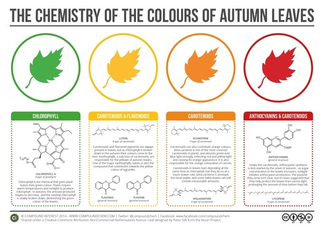 The Chemicals Behind the Colours of Autumn Leaves [Infographic] | Aquascaping and Nature | Scoop.it