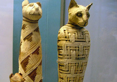 `Mummified cats used as Egyptian offerings 2000 years ago - Zee News | Feline Health and News - manhattancats.com | Scoop.it