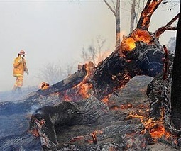Australian summer lurches from fire to floods | Australian Ecosystems | Scoop.it