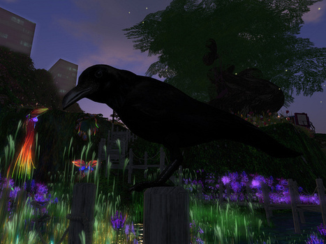 A crow moved into my new wetlands. He told me his name was Charles. Charles B. Crow. I told him he may stay. But he has yet to tell me what the B. stands for. | Everything About 3D Immersive Virtual Worlds | Scoop.it