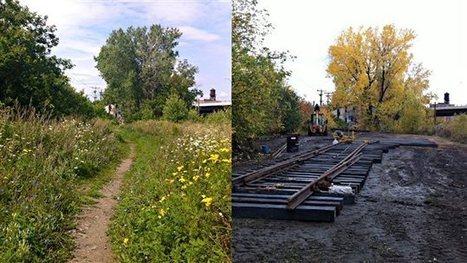Le Canadian Pacific détruit un espace vert du Mile-End « par erreur »   Politique et actualité Montréal   Scoop.it