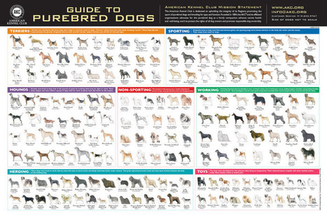 AKC Dog Breeds Pictures – Guide To Purebred Dogs Official American Kennel Club AKC All Breed Poster | Dog Pictures - Pindoggy | Scoop.it