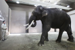 Elephant in South Korean Zoo Imitates Human Speech | TIME.com | Great Stuff to Scoop | Scoop.it