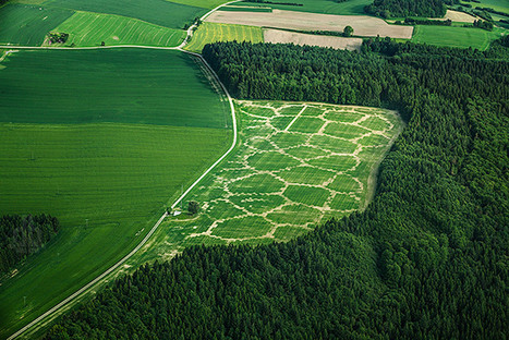 digitally farming with agricultural printing + altered landscapes - designboom | Peer2Politics | Scoop.it