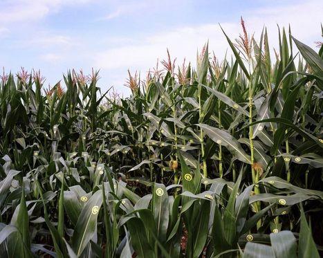 Bayer-Monsanto, alchimie monstrueuse | Géographie : les dernières nouvelles de la toile. | Scoop.it