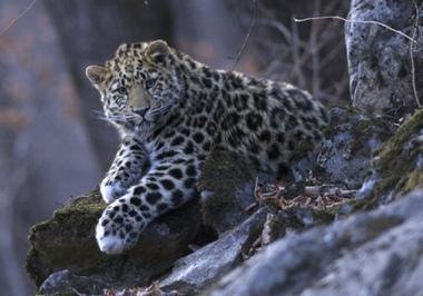 Назови леопарденка | Биология | Scoop.it