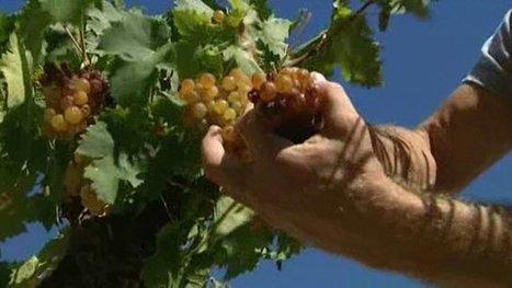 Devenir propriétaire d'un vignoble : c'est possible grâce à la vigne participative - France 3 Languedoc-Roussillon   social media subjects   Scoop.it