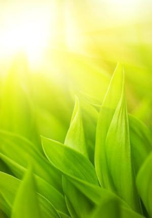 Artificial photosynthesis breakthrough: Fast molecular catalyzer | Messenger for mother Earth | Scoop.it