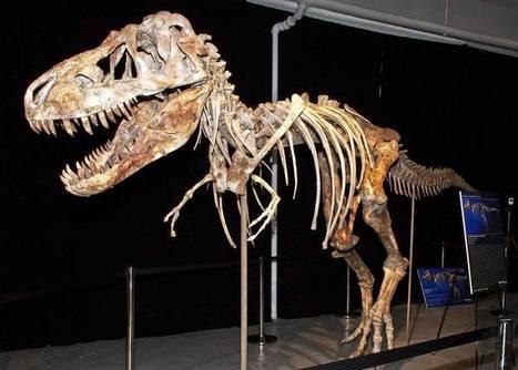 Saving this dinosaur took a skeleton crew | Merveilles - Marvels | Scoop.it