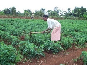 Africa: Transforming agric, how foreign investment can work - Articles | Food Security | Scoop.it