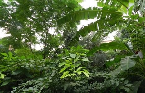 Como plantar uma floresta em qualquer lugar | vida&sustentabilidade | Scoop.it