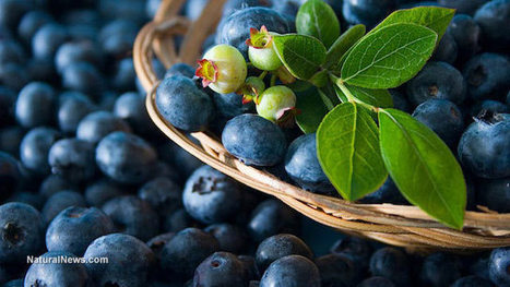 Freezing blueberries increases availability of antioxidants - here are 8 ways this superfood benefits health | The Basic Life | Scoop.it