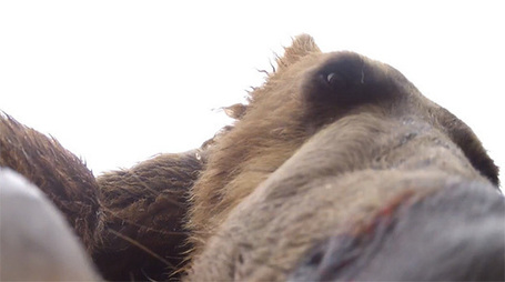Camera Captures What It's Like to Get Eaten by a Grizzly Bear - PetaPixel | Steve Troletti Nature and Wildlife Photographer | Scoop.it
