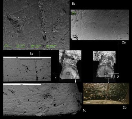 Evidencias del primer homínido diestro hace 1,8 millones de años | Arqueología, Historia Antigua y Medieval - Archeology, Ancient and Medieval History byTerrae Antiqvae | Scoop.it