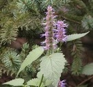 Attracting More Bees And Pollinators to Your Garden | Green Wisdom | Scoop.it