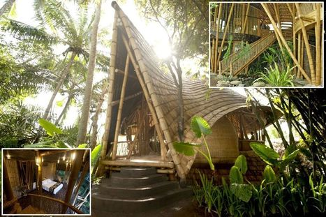 A room with bamboo: See inside amazing jungle luxury homes hand crafted from ... - Mirror.co.uk | Benhil - Innovative bamboo | Scoop.it