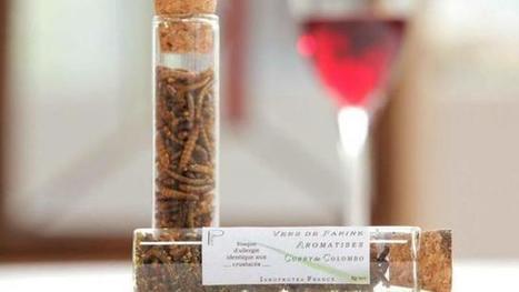 Insolite. Quel vin boire avec des insectes ?   Le vin quotidien   Scoop.it